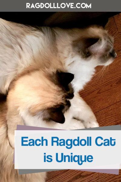 2 Ragdoll cats lying on the floor