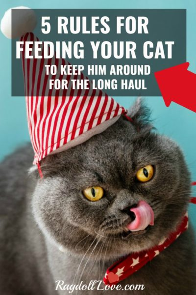 Gray cat with yellow eyes wearing a red and white party hat and licking his lips