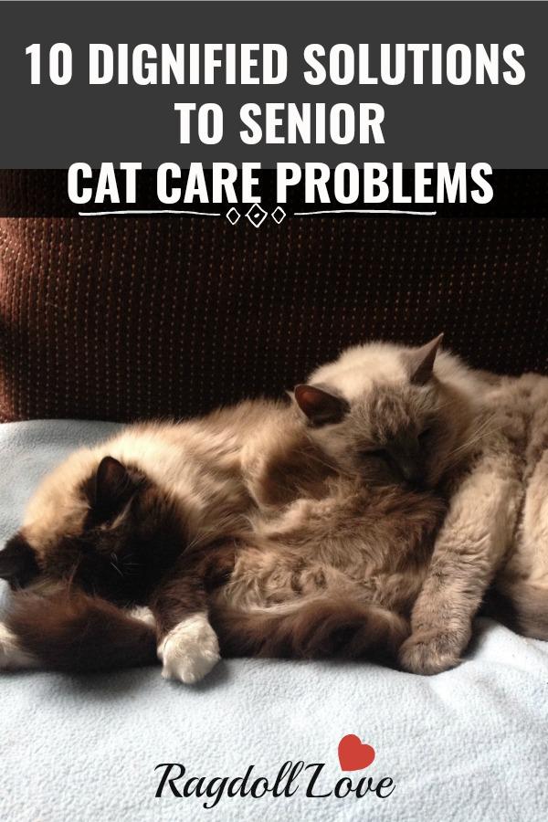 2 older senior cats cuddling on a chair